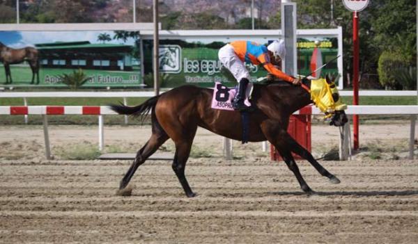 Pedro Caimán será el caballo a vencer en el Clásico Internacional Sprinters (gr. I) (Meridiano)