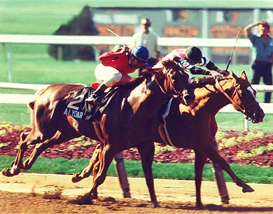 Affirmed (adentro) gana una épica batalla contra Alydar en el Belmont de 1978