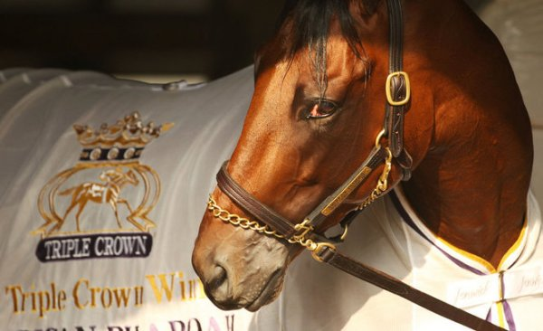 American Pharoah: la mirada de un indiscutible campeón (NJ Photos)